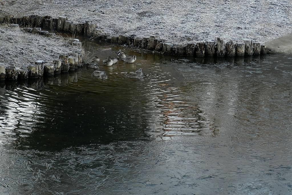 寒い朝でした/爆発近いベテルギウス/当たり年賀葉書_b0024798_85626100.jpg