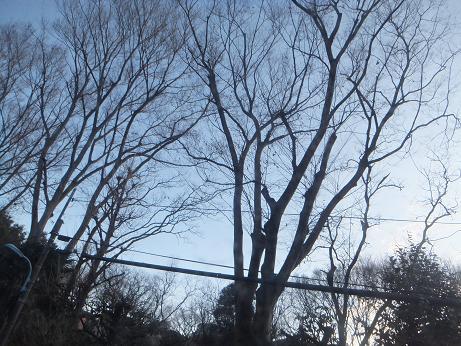 インプロビゼイション[冬の樹]_e0151902_119182.jpg