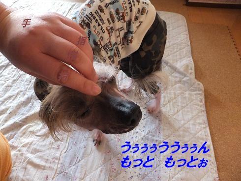 f0179203_7103988.jpg