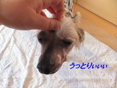 f0179203_710453.jpg