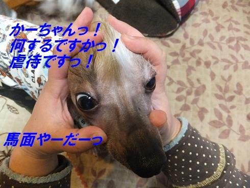 f0179203_782887.jpg