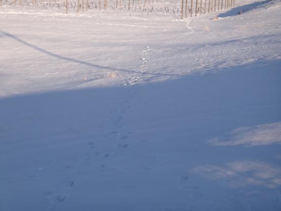 この冬一番の冷え込みに_f0064906_20152269.jpg