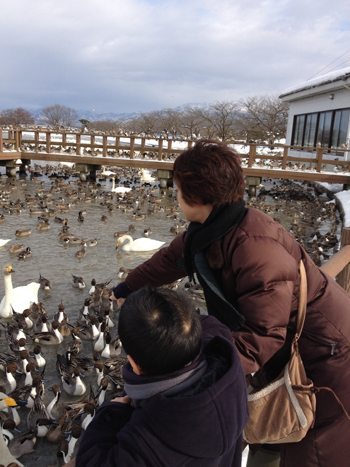 毎年恒例の瓢湖へ_a0126418_845052.jpg