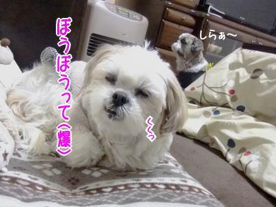 b0217621_2011082.jpg
