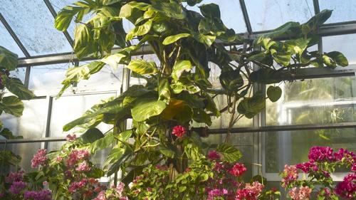植物園 伊豆_b0212922_14275423.jpg