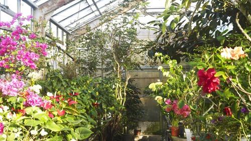 植物園 伊豆_b0212922_143152100.jpg