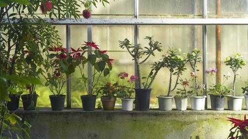 植物園 伊豆_b0212922_14322367.jpg