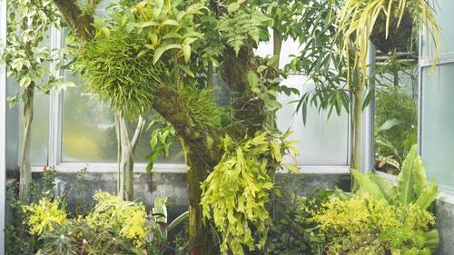 植物園 伊豆_b0212922_1453435.jpg