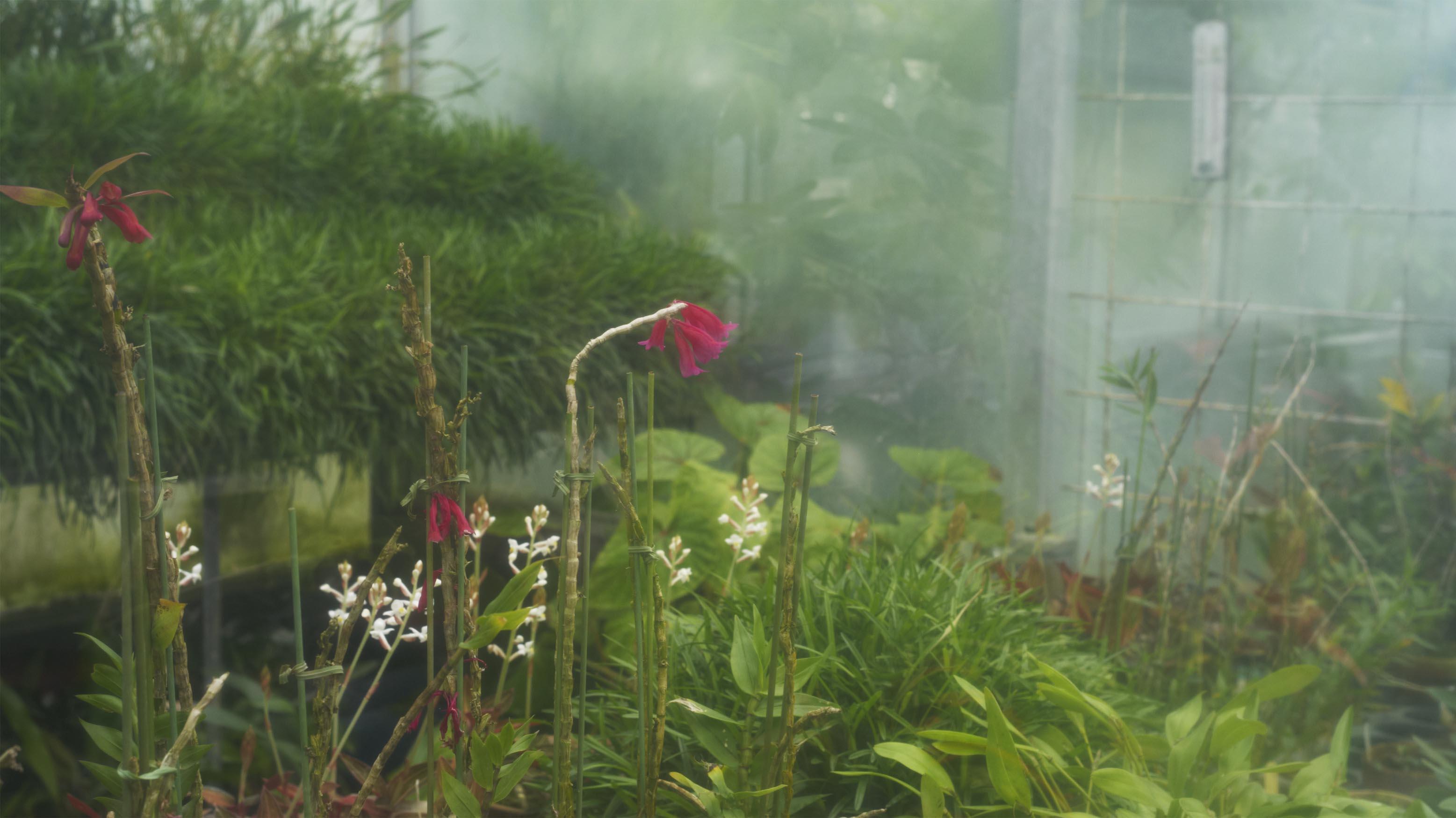 植物園 伊豆_b0212922_1454575.jpg