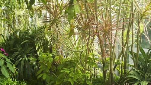 植物園 伊豆_b0212922_15173929.jpg
