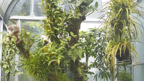 植物園 伊豆_b0212922_15295343.jpg