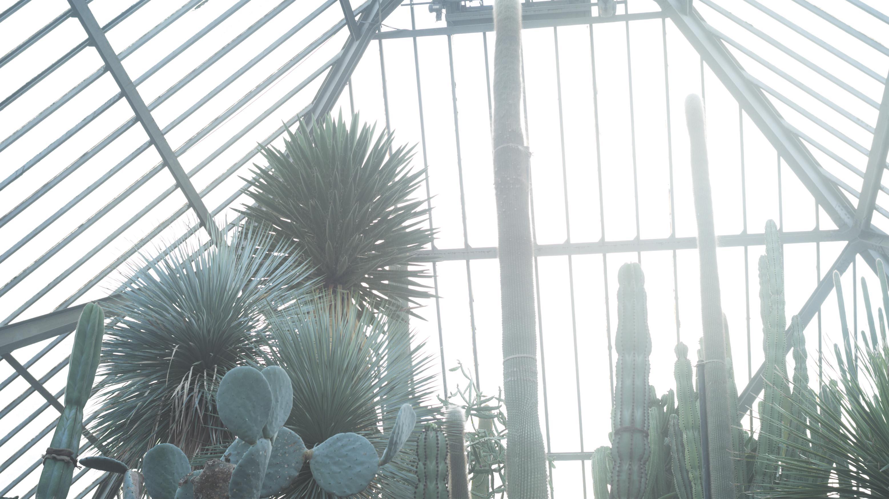 植物園 伊豆_b0212922_15481984.jpg