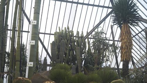植物園 伊豆_b0212922_15491771.jpg