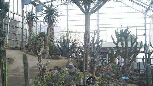 植物園 伊豆_b0212922_15561665.jpg