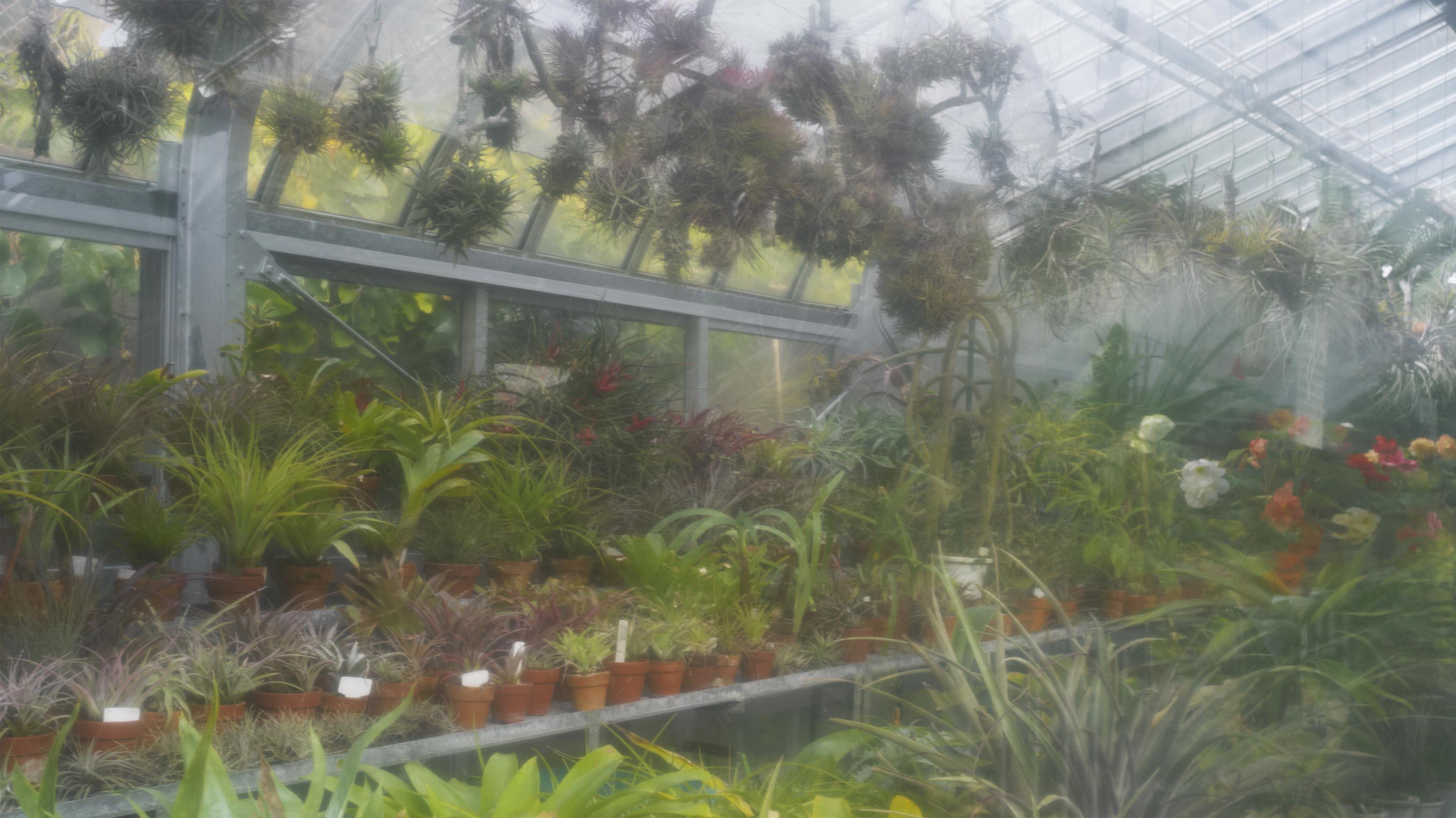 植物園 伊豆_b0212922_1595176.jpg