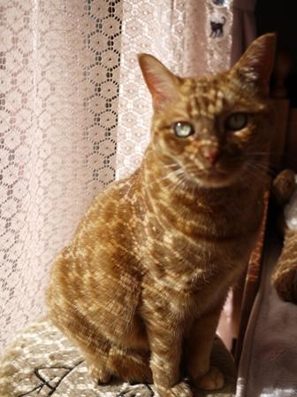 新しい模様猫 しぇる編。_a0143140_23173863.jpg