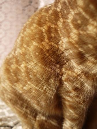 新しい模様猫 しぇる編。_a0143140_23181817.jpg