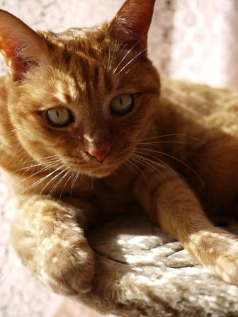 新しい模様猫 しぇる編。_a0143140_23212944.jpg