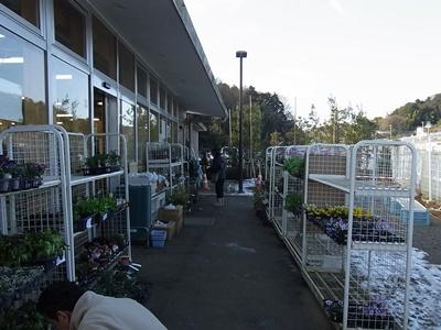 植木コーナー