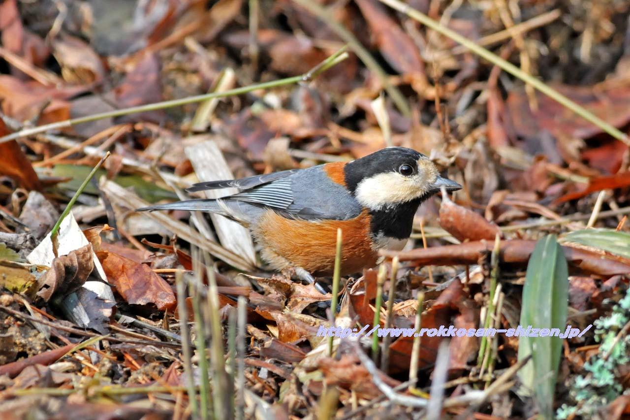 やはり冬鳥が少ない_c0129047_22535816.jpg