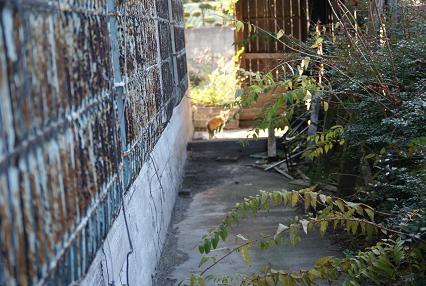 ネコと路地_f0202682_1446112.jpg