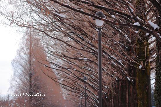 雪化粧_b0208495_23325050.jpg