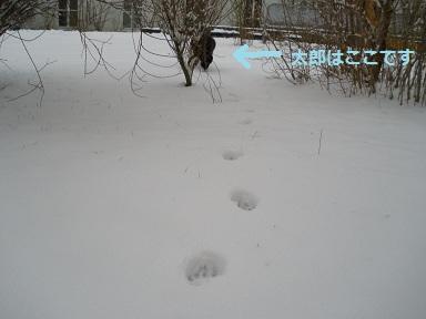 c0207698_2165922.jpg