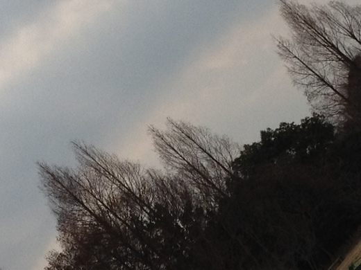 2012.1.28_c0203505_21441972.jpg