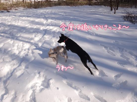 風子姉さんの遊び方の指導_f0064906_1625286.jpg
