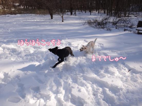 風子姉さんの遊び方の指導_f0064906_16261918.jpg