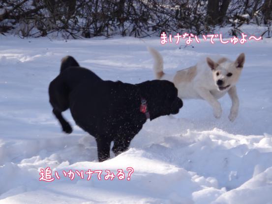 風子姉さんの遊び方の指導_f0064906_1626944.jpg