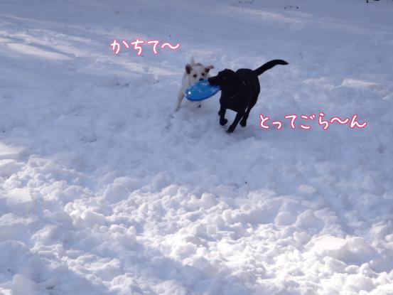風子姉さんの遊び方の指導_f0064906_1630384.jpg