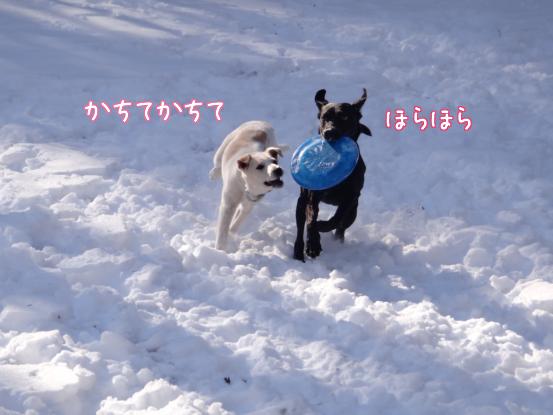 風子姉さんの遊び方の指導_f0064906_16341890.jpg