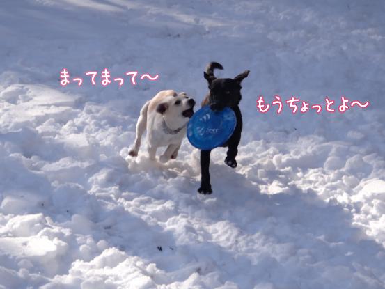 風子姉さんの遊び方の指導_f0064906_16343995.jpg
