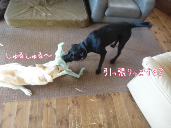 風子姉さんの遊び方の指導_f0064906_16395589.jpg