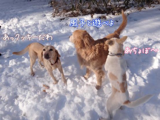 風子姉さんの遊び方の指導_f0064906_1832331.jpg