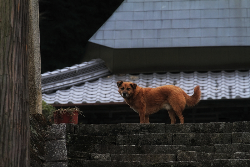 番犬_c0110922_1346221.jpg