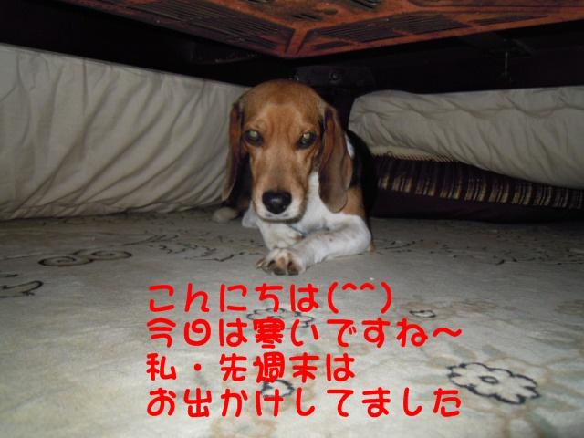 c0166622_1334649.jpg