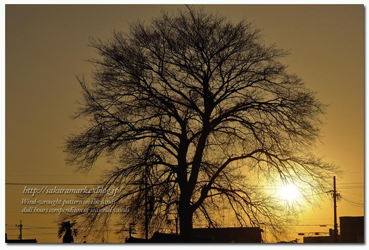 樹影と夕日と・・・。_f0235723_1835488.jpg