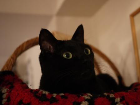 おおきなあくび猫 のぇる編。_a0143140_2364510.jpg