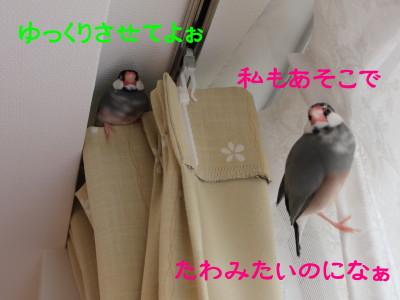 b0158061_22262654.jpg