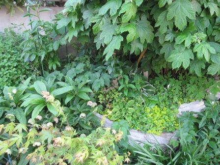 冬の庭の手入れを・・・_a0243064_1813851.jpg