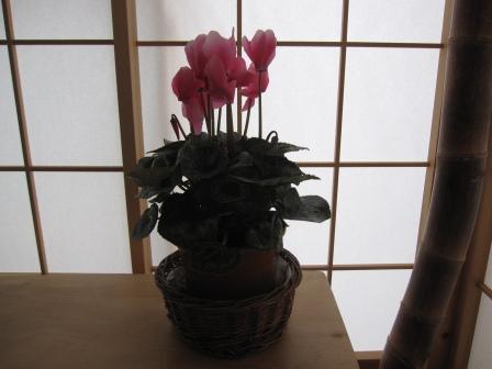 冬の庭の手入れを・・・_a0243064_1816153.jpg