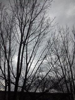 この木なんの木〜_c0164268_10472071.jpg