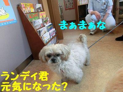 病院行ってキマシタ_e0222588_17351762.jpg