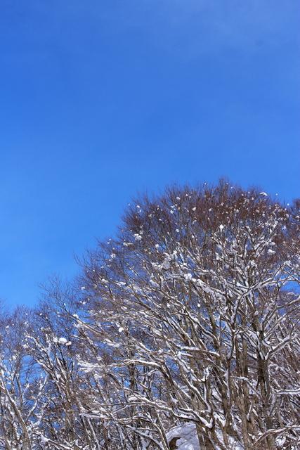 青空・吹雪・夕焼けの雪景色_a0158797_22272761.jpg