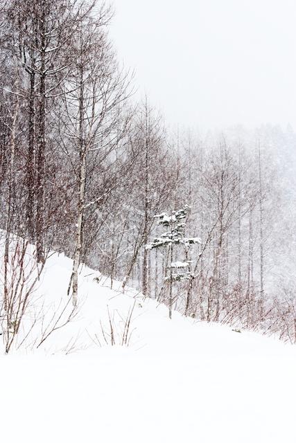 青空・吹雪・夕焼けの雪景色_a0158797_2232545.jpg