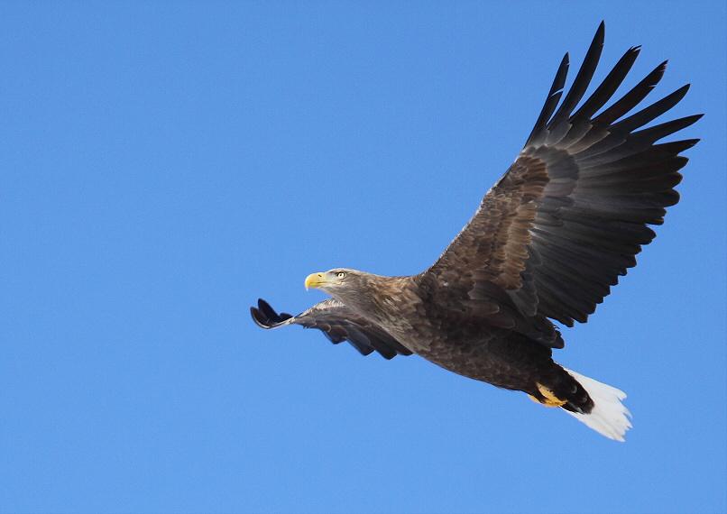 青空を飛ぶ・・・_c0113597_15423888.jpg
