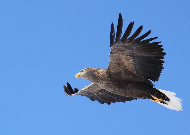 青空を飛ぶ・・・_c0113597_15425121.jpg