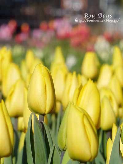 ひと足お先に、春で〜し♪^^_d0128697_22272340.jpg